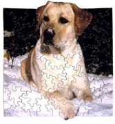 Fool's Gold wooden jigsaw puzzle Alex dog