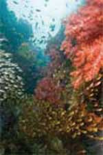Coral Reef wooden jigsaw puzzle